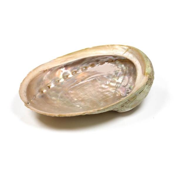 Abalone naturelle Arc-en-ciel - Coquille d'Ormeau - Herboristerie du Valmont