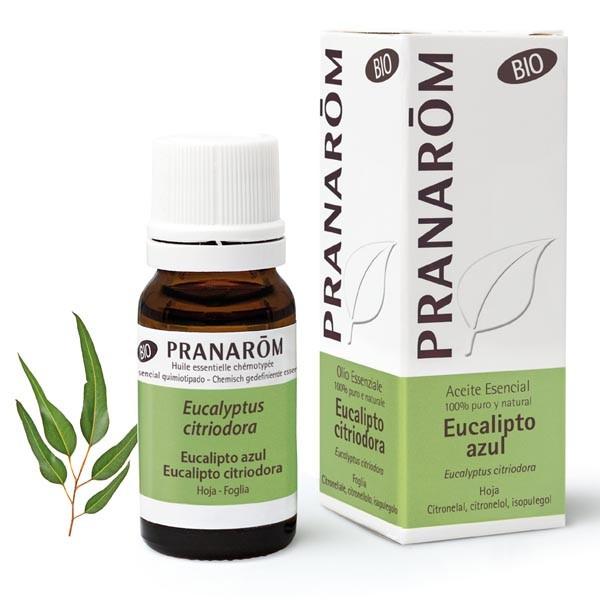 Eucalyptus citronné Bio 10 ml - Pranarôm