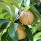 Muscade - Poudre Bio Herboristerie du Valmont