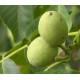 Brou de noix - Poudre 100 % pure