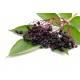 Sureau - Fleur mondée Bio Herboristerie du Valmont
