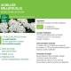 Teinture mère Achillée Millefeuille Bio - Millefolium 100 ml Ladrôme