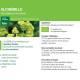 Teinture-mère Alchemille Bio - Alchemilla vulgaris 100 ml Ladrôme