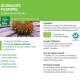 Teinture-mère Echinacée Bio - Echinacea purpurea 50 ml Ladrôme