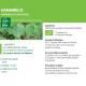 Teinture-mère Hamamelis Bio - 50 ml - Ladrôme