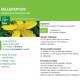 Teinture-mère Millepertuis Bio - Hypericum - 50 ml - Ladrôme