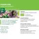 Teinture-mère Passiflore Bio - Passiflora incarnata 100 ml Ladrôme