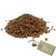 Coriandre - Coriandrum sativum - Graines Entières Bio