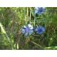 Bleuet - Pétales 1ère Qualité Herboristerie du Valmont