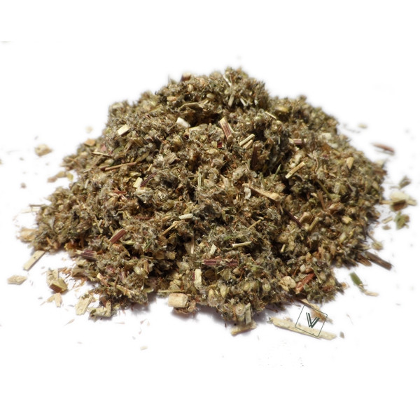 Armoise commune - Artemisia vulgars - Plante coupée Bio