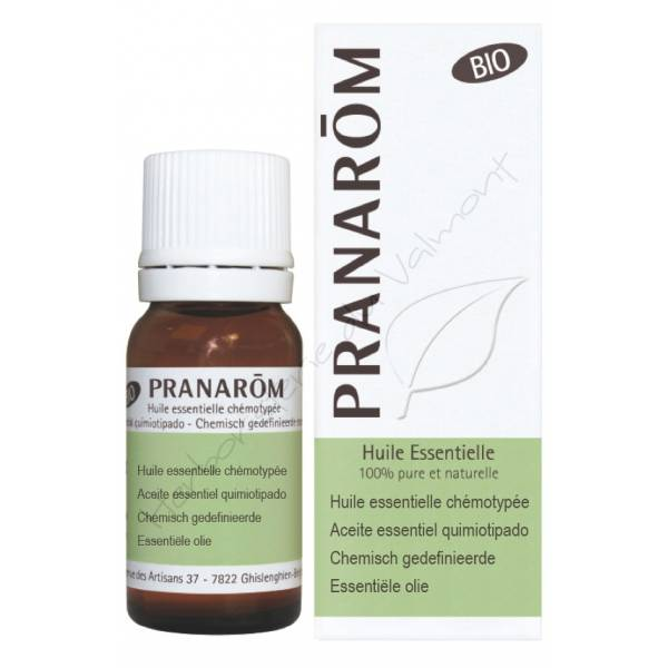 Huile Essentielle - Cajeput 10 ml Bio - Pranarôm