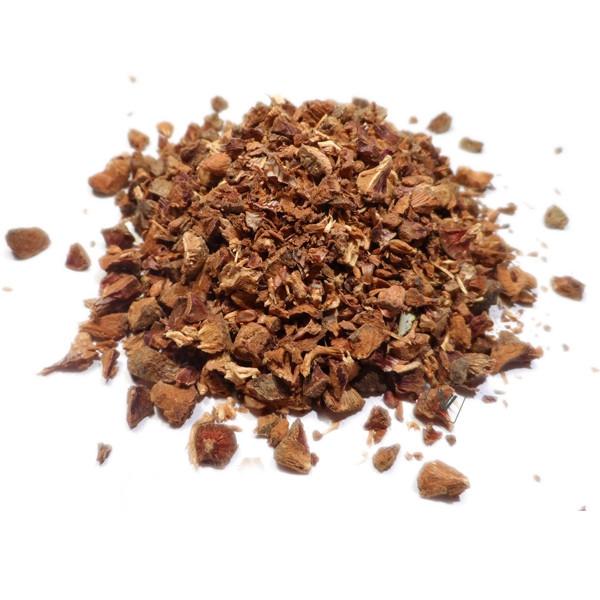 Cyprès - Cupressus sempervirens - Noix coupée menu
