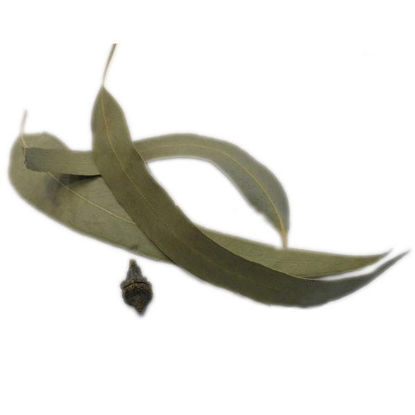 Eucalyptus - Feuille entière Bio - 100 gr
