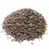 Caraway - seed Bio - 100 gr
