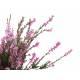 Bruyere - Fleur Bio Herboristerie du Valmont