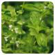 Huile Essentielle - Basilic exotique Huile essentielle 10ml - Pranarôm