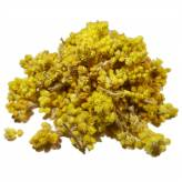 Immortelle - Hélichryse italienne - Fleurs - 50 gr