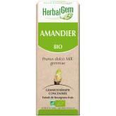 Amandier bourgeon 15 ml BIO- Herbalgem