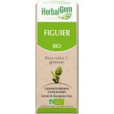 Figuier bourgeon 50 ml Bio - Herbalgem