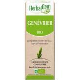 Genévrier bourgeon 15 ml - Herbalgem