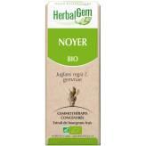 Noyer bourgeon 50 ml Bio - Herbalgem