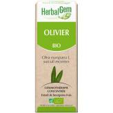 Olivier bourgeon 15 ml Bio - Herbalgem