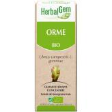 Orme bourgeon 50 ml Bio - Herbalgem
