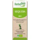 Séquoia 15 ml Bio - Herbalgem