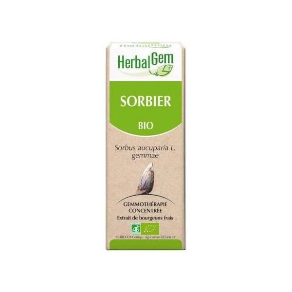 Sorbier Bourgeon Bio - Sorbus aucuparia Macérat - 15 ml - Herbalgem
